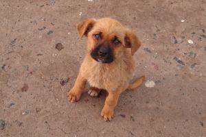 kleine-hond
