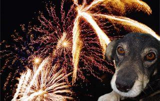 vuurwerkangst hond