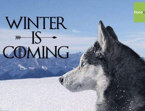 Winterweer en je hond