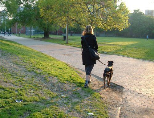 De grote nadelen van honden aangelijnd laten ontmoeten