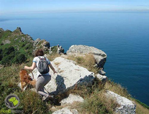 Inpaklijst voor je hond mee op vakantie