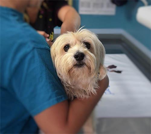 Wat este giardia bij honden. Giardia parasiet hond behandeling