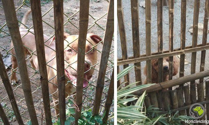 hondenschool thailand