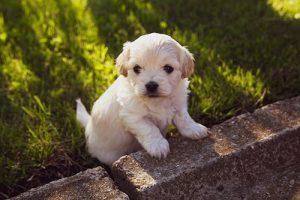 puppycursus op afstand