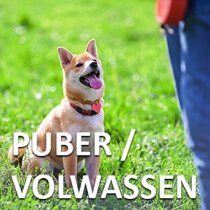 Puber en Volwassen honden