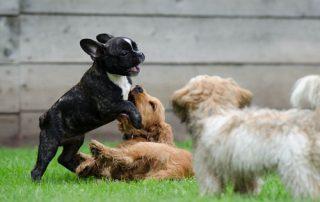 puppy spelen